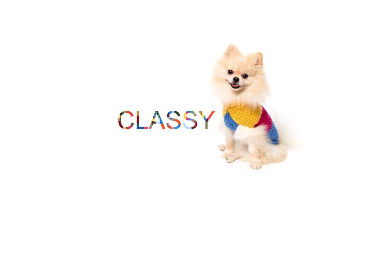 Abbigliamento di lusso per cani